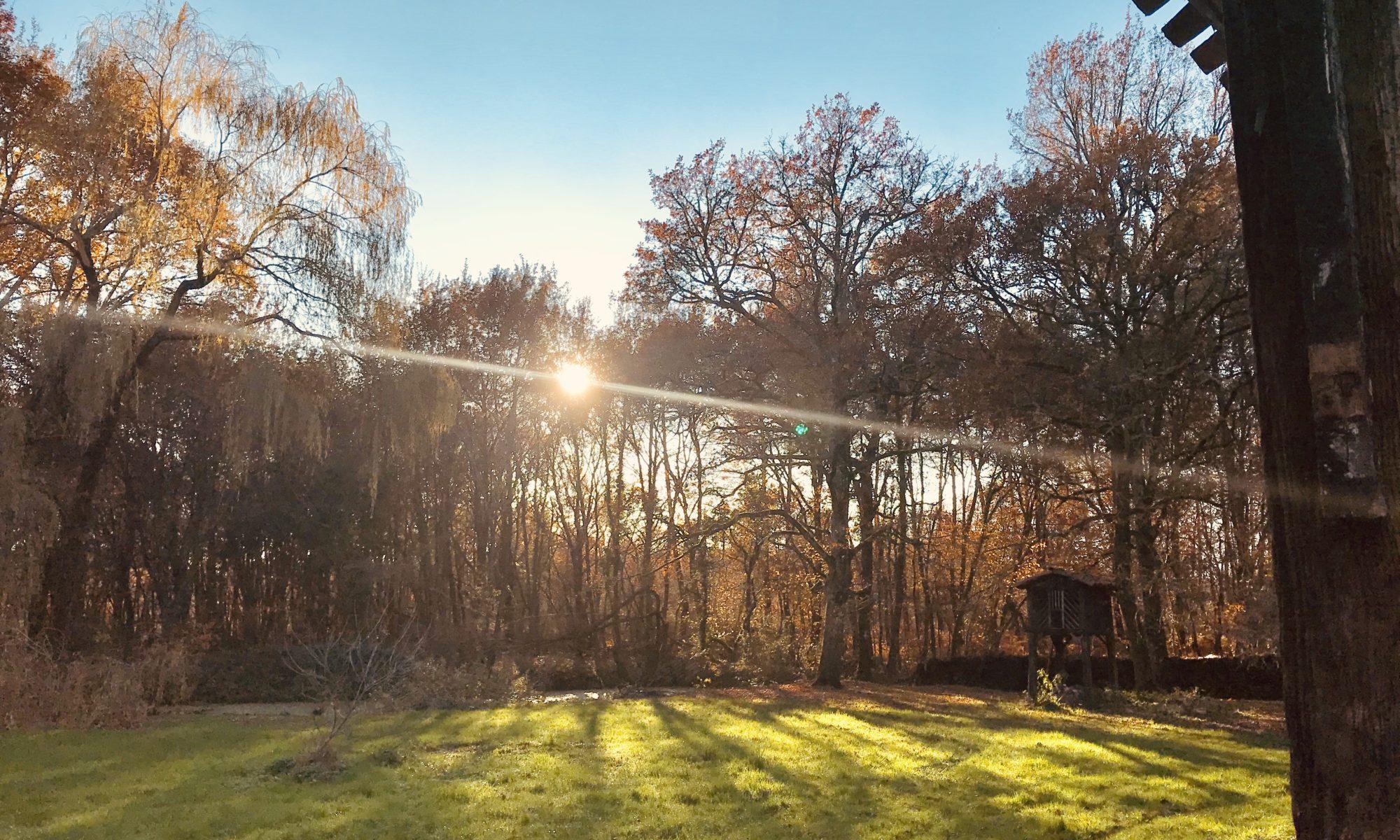 paysage soleil a travers arbres